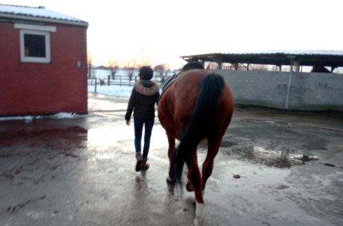 dochter gaat gaan paardrijden